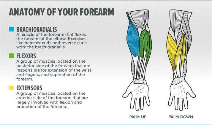 Forearm Workout Tools